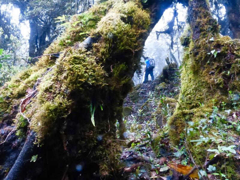 Durch einen mystischen, schier undurchdringlichen Nebelwald