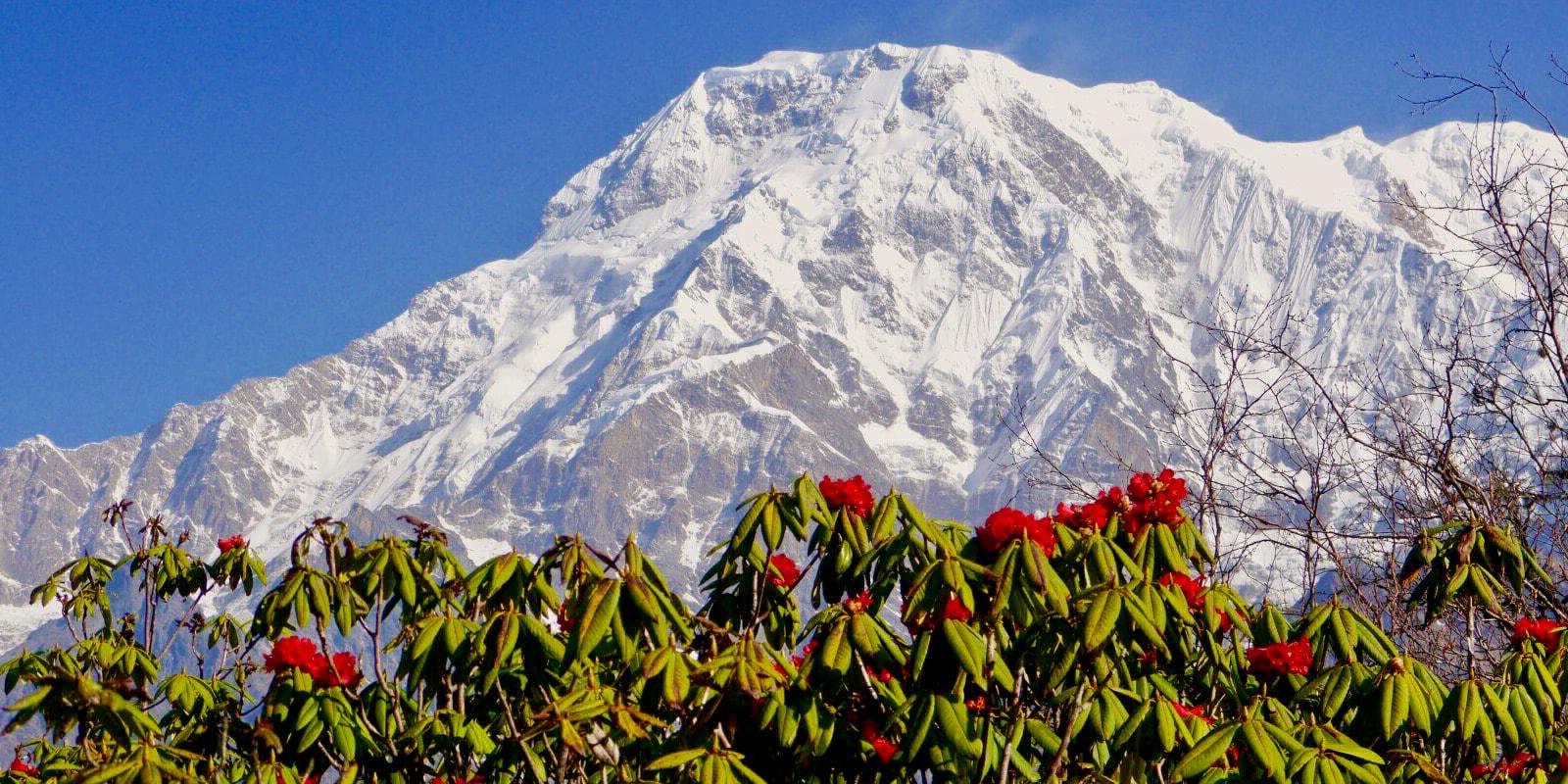 Annapurna Scenic Trail