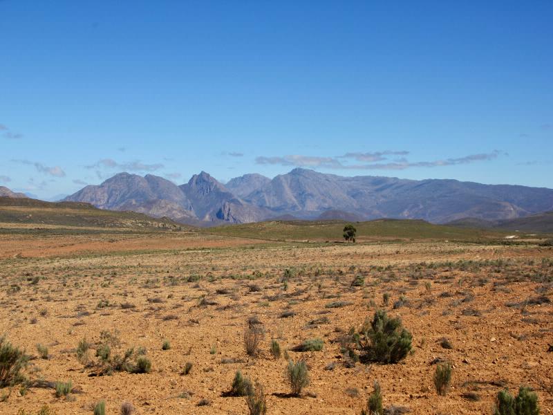 Beinahe direkt hinter dem Küstengebirge erstreckt sich mit dem Karoo Nationalpark die unberührte afrikanische Wildnis.