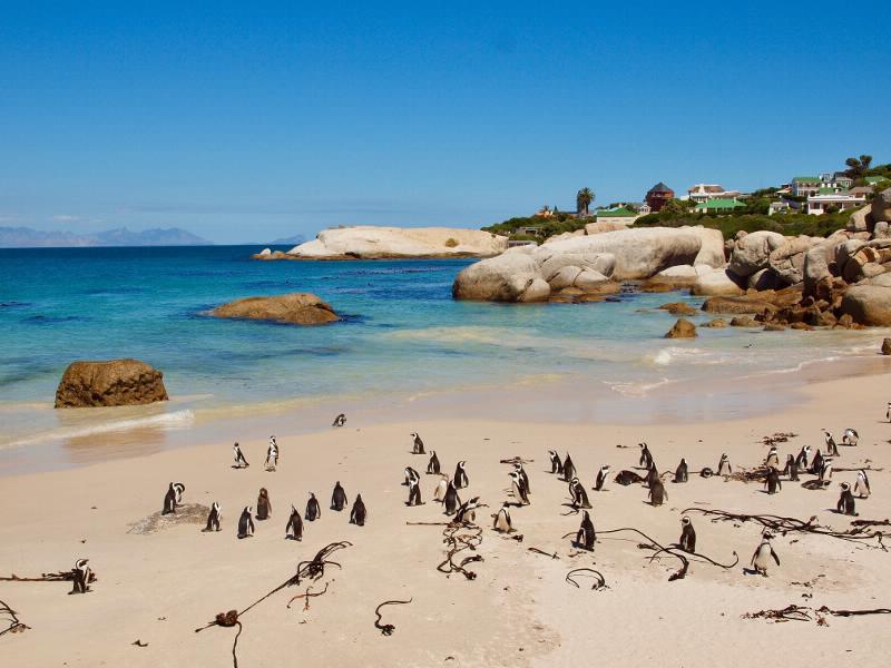 Berühmt für seine Brillenpinguin-Kolonien und seine bizarren Felsformationen ist der Boulders Beach auf der Kap Halbinsel.