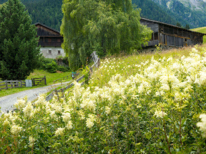 What can I expect at the Höfe Trail Osttirol? A Cultural Hike in the best sense of the word©Dapra/Landesumweltanwaltschaft