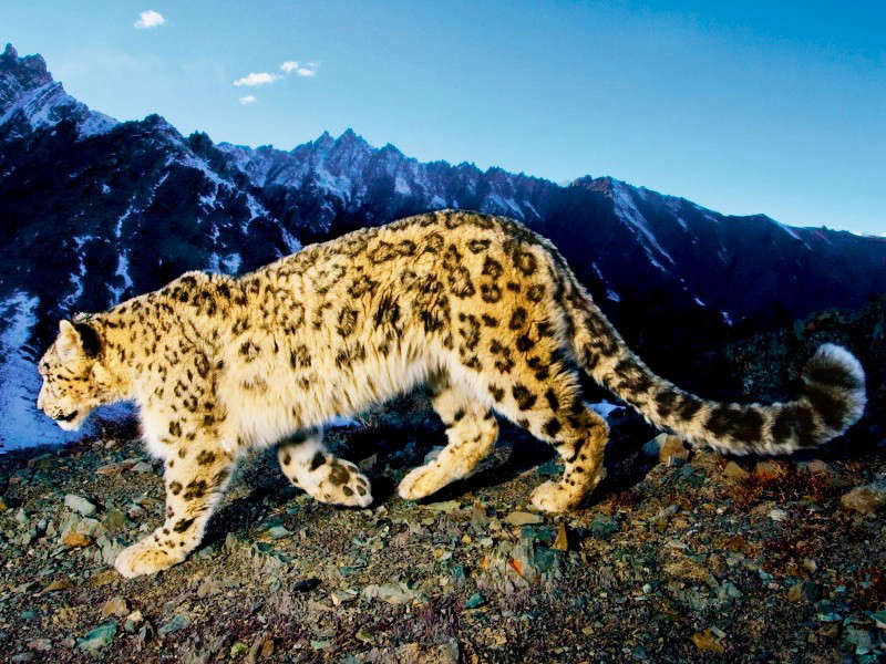 Snow Leopard Trail